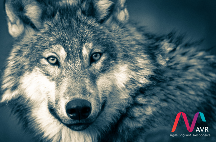 AVR_Threat_Hunting_Wolf
